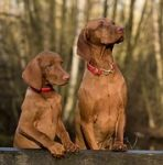 Ktoré psie plemená sa hodia do rodiny